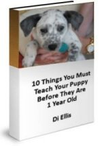10 things you must teach your puppy